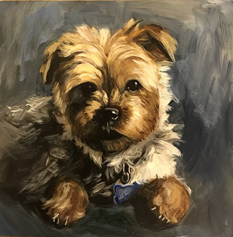 oil portrait of yorkie dog, custom portrait, commissions available
