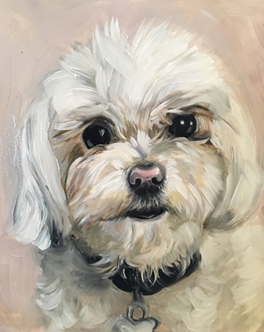 oil painting of a small fluffy white dog, oil portrait commission