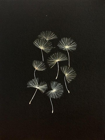 Dandelion (Watercolor on black paper)