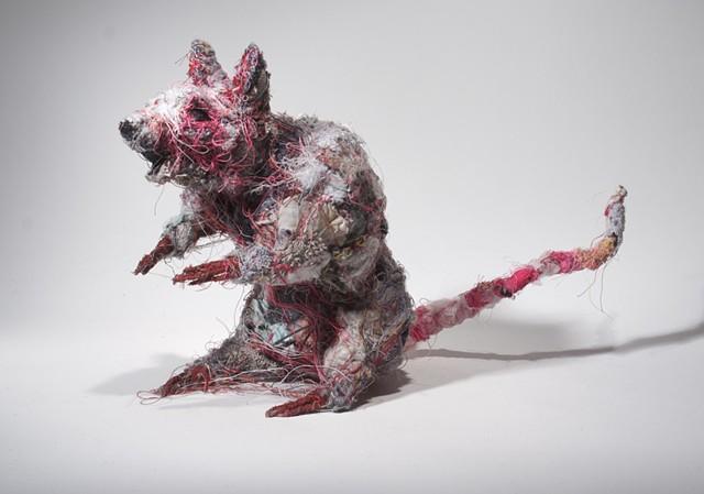 Rat #6