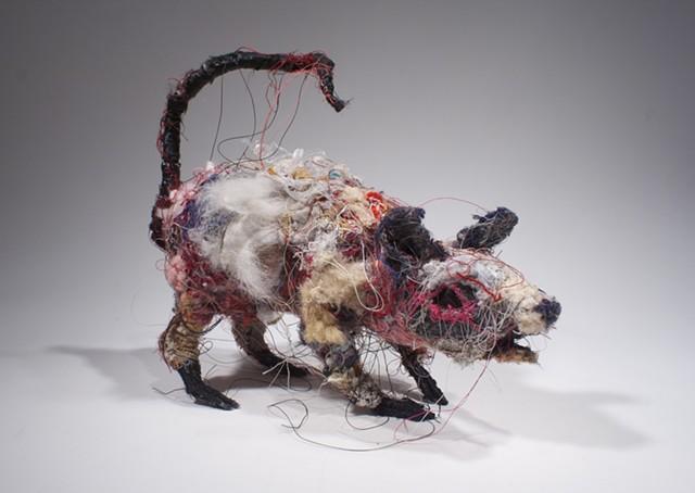 Rat #7
