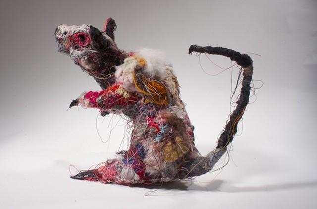 Rat #8