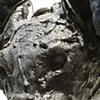 tar pup #1 (feline) detail