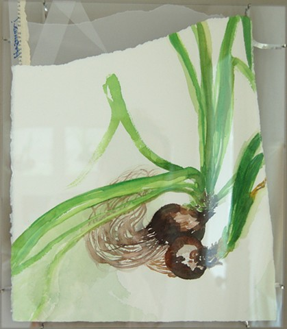 narcissus 7 (Harvest Song; framed)