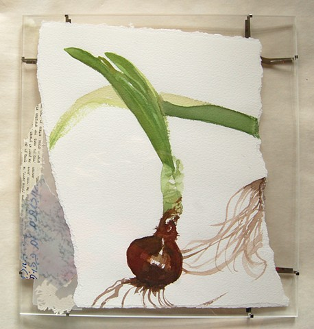 narcissus 8 (Harvest Song; framed)