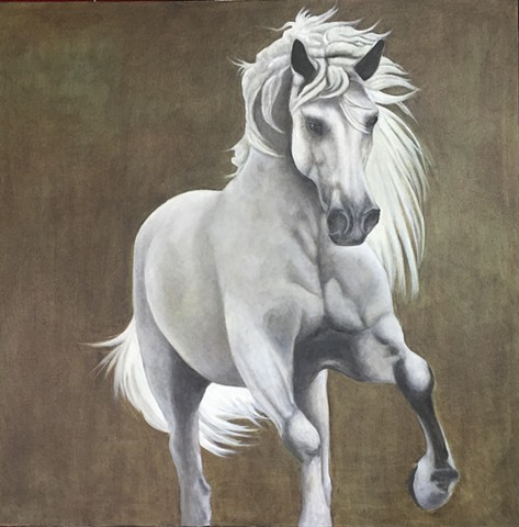 Oil painting of grey horse running by Kandy Stern.