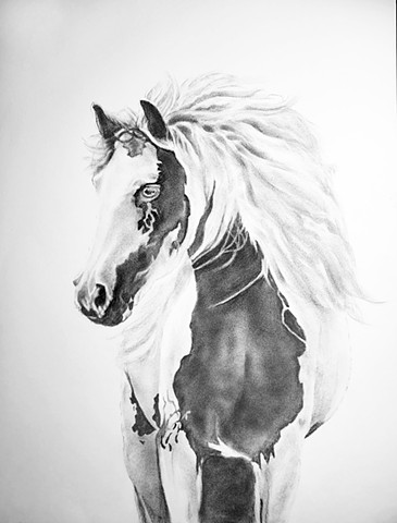 Pinto stallion drawn in charcoal on paper by artist, Kandy Stern.