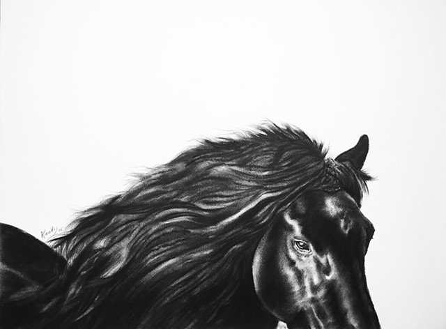 Charcoal drawing of horse head by Kandy STern.