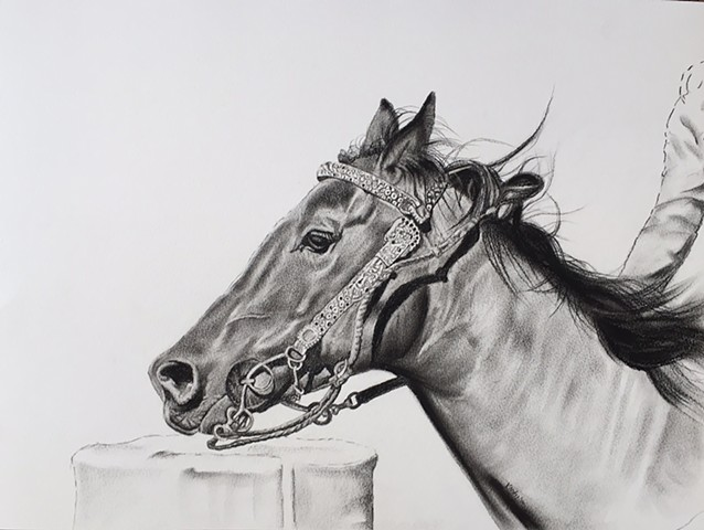 Charcoal drawing of bridled horse running by Kandy Stern.