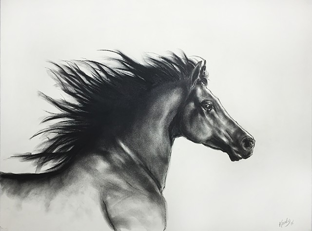 Charcoal drawing of arabian horse running by Kandy Stern.
