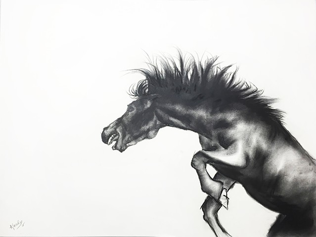 Charcoal drawing of angry horse by Kandy stern.