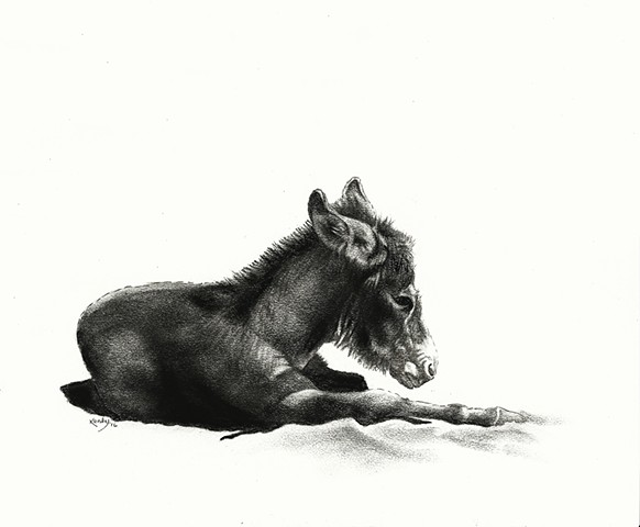 Charcoal drawing of baby miniature donkey by Kandy Stern.