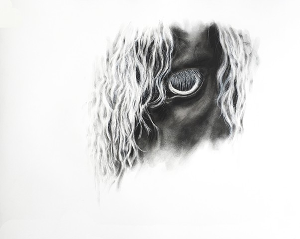 Charcoal drawing of horse eye by Kandy Stern.