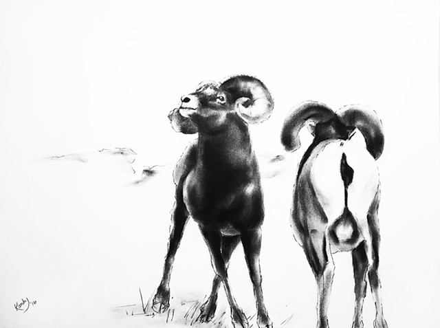 Charcoal drawing of two bighorn sheep by Kandy Stern.