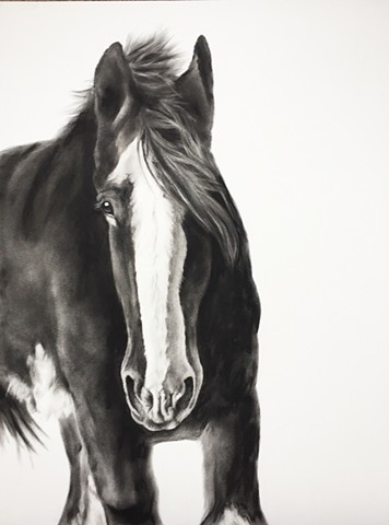 A charcoal drawing of a Clydesdale horse by Kandy Stern.