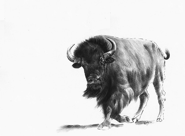 Charcoal drawing of running bison by Kandy Stern.
