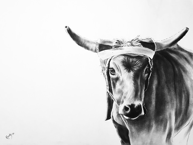 Charcoal drawing of rodeo steer by Kandy STern.