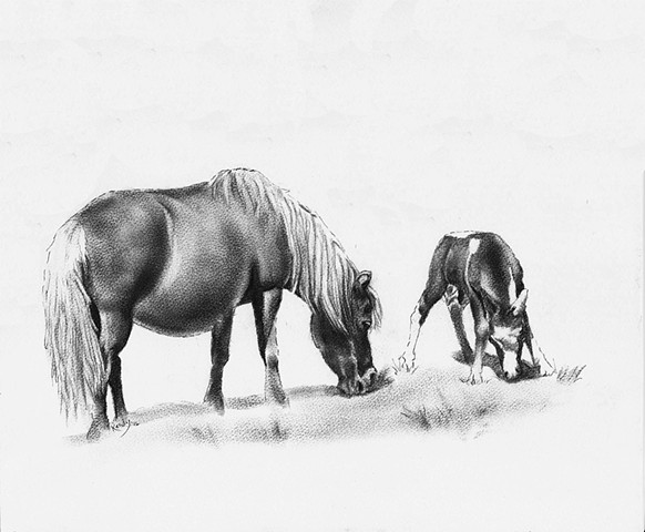 Charcoal drawing of miniature mare and foal by Kandy Stern.
