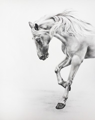 A Charcoal drawing of a running horse by Kandy Stern.