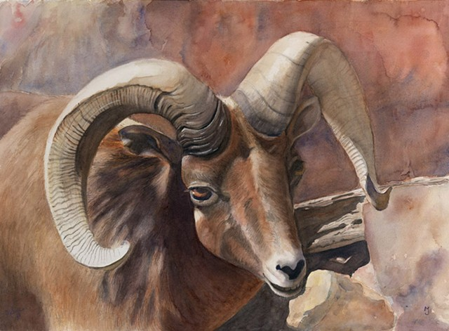 Big Horn Ram in Western United States