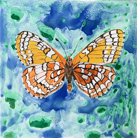 Endangered Checkerspot butterfly