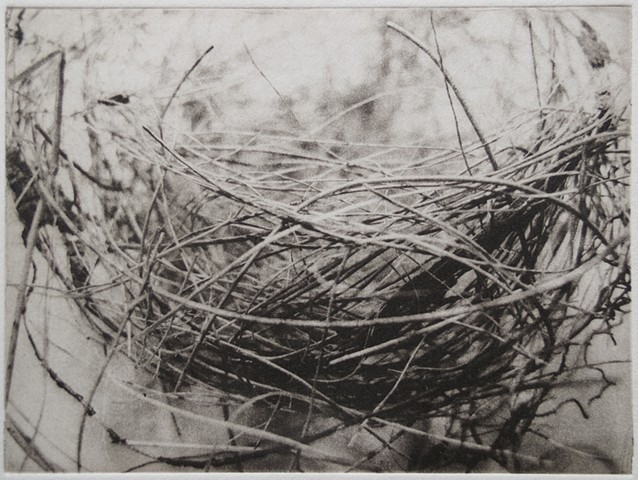 Close up look at a small bird nest. Polymer photogravure one-color print by John Pearson.