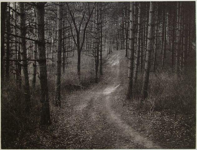 A path through a red pine plantation in Marine-on-St. Croix, Minnesota
