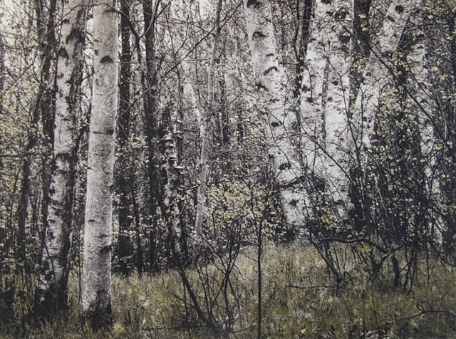 Springtime vew along a trail in Kathio State Park, Minnesota, near Mille Lacs Lake. Two-plate polymer photogravure intaglio print on tiepolo paper..