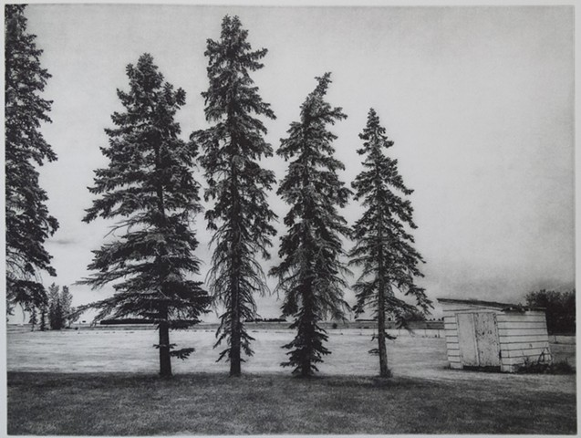 Spruce Trees along the edge of a field in the Red River Valley of North Dakota. A polymer photogravure print by John Pearson on pescia paper.