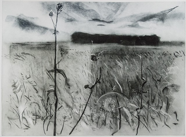 A Polymer photogravure intaglio print of a charcoal drawing that shows Malmberg Prairie SNA in northwestern Minnesota..