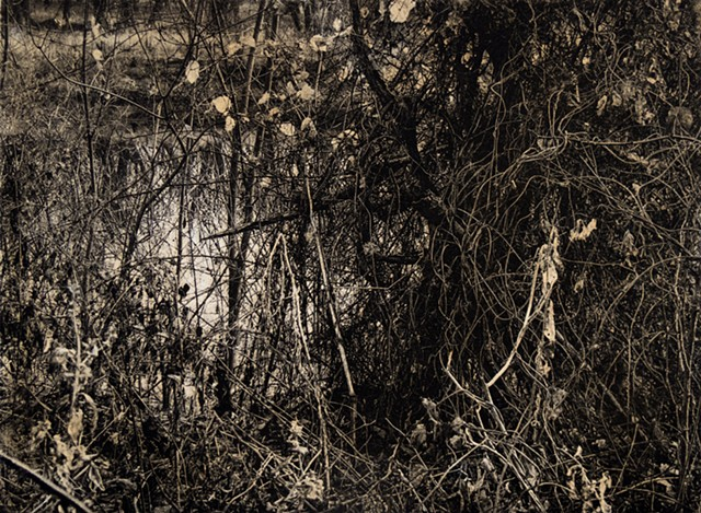 A fall view of a tangle near the banks of the Saint Croix River in William O'Brien State Park, Minnesota. Two-plate polymer photogravure intaglio print on tiepolo paper.