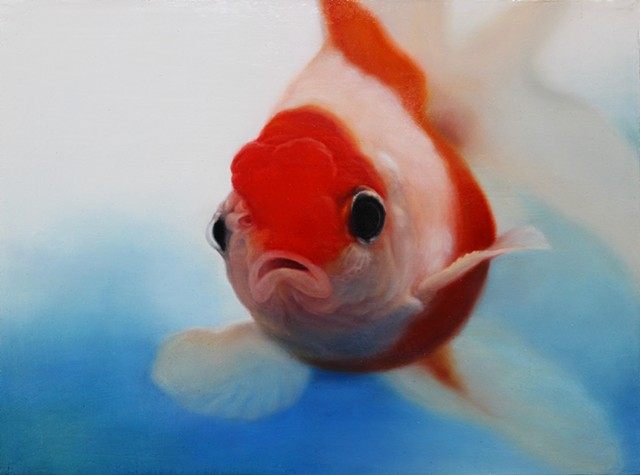 Goldfish(Red Cap)