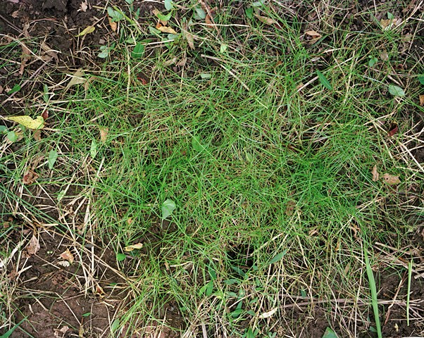 photograph of grass after clearing the weeds, rephotography
