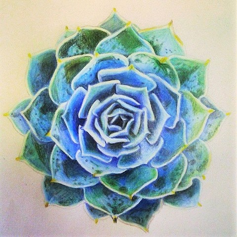 Prismacolor colored pencil study of succulent
