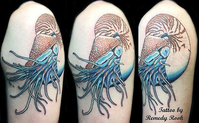 A tattoo of a nautilus floating in nothing.