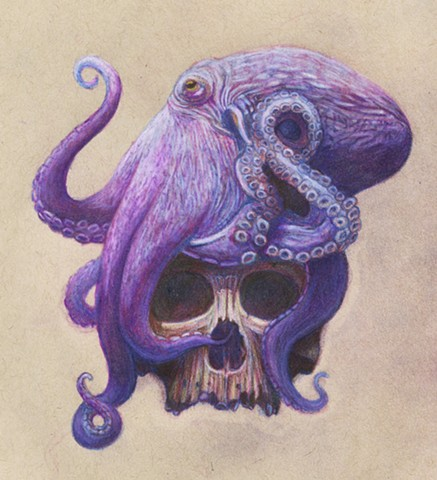 Octopus and skull drawing