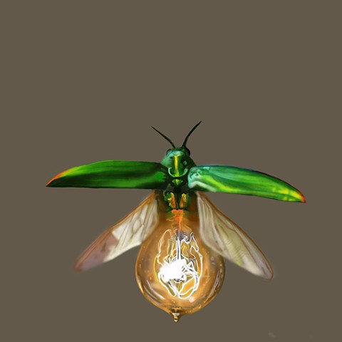 Digital sketch: lightbulb beetle
