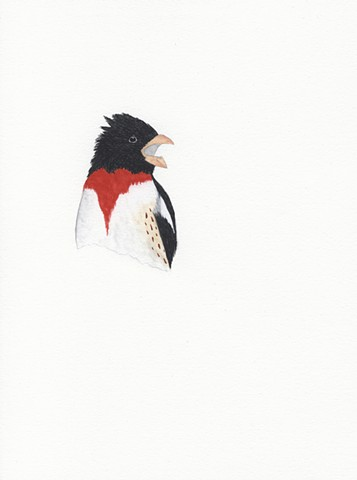 Grosbeak Singing Bird