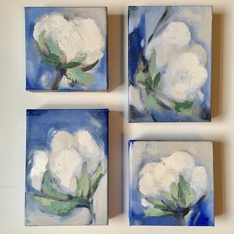 Cotton studies