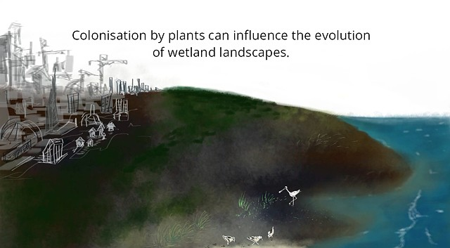 Animation about a study on self-organisation of a biogeomorphic landscapes controlled by plant life-history traits by Christian Schwarz (2018) in the journal Nature GeoScience.