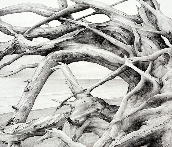 Graphite drawing of driftwood on Pacific Northwest beach