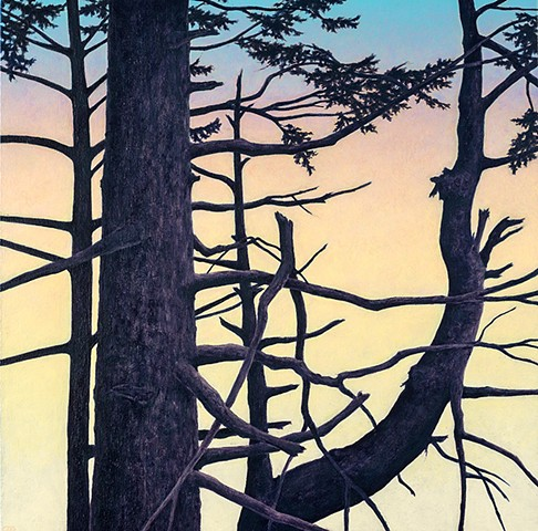 Silhouette of conifer trees at sunset