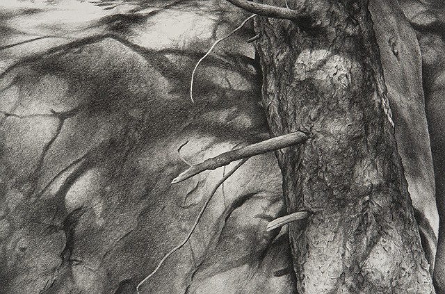 Charcoal drawing of fir tree and shadows on rock