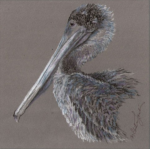 Charcoal and colored pencil drawing of a North American brown pelican by M. Christine Landis