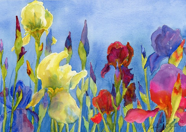 colorful watercolor painting of yellow, blue and red irises or flags by M Christine Landis