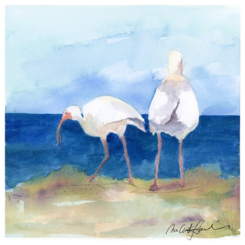 watercolor painting of white ibis birds on the beach by M Christine Landis