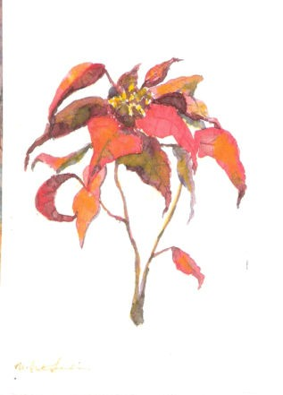 watercolor painting of a sprig of poinsettia flowers by M Christine Landis