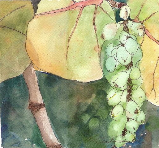 watercolor painting of sea grape leaves and berries by M Christine Landis