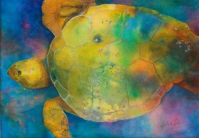 watercolor painting of a loggerhead turtle with some barnacles on his back and swimming underwater by M. Christine Landis