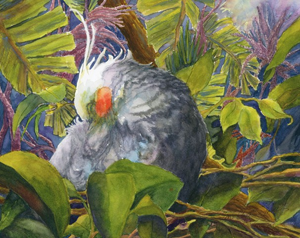 watercolor painting of sleeping cockatiel in tropical foliage at Brevard County Zoo by M Christine Landis